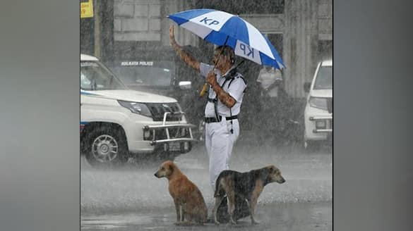 Cop gives shelter to dogs under his umbrella amid heavy rain; heartwarming picture goes viral - gps