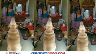 महिला के साथ घर में पूजा करते डॉगी का वीडियो Viral, सोशल मीडिया पर हो रही जमकर तारीफ