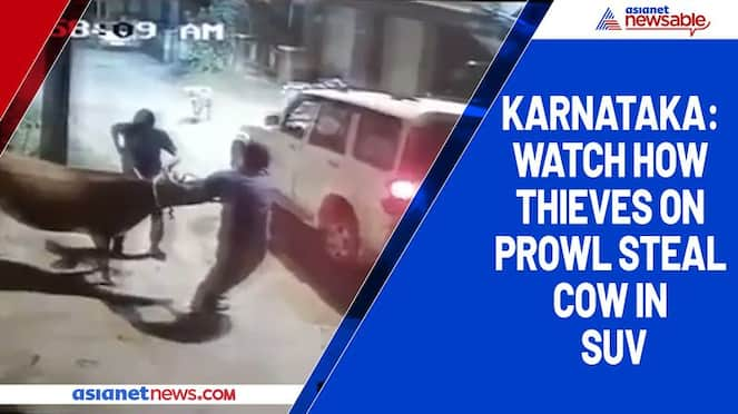 Karnataka Watch how thieves on prowl steal cow in SUV-ycb