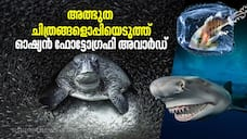 Ocean Photography Award marking marine pollution