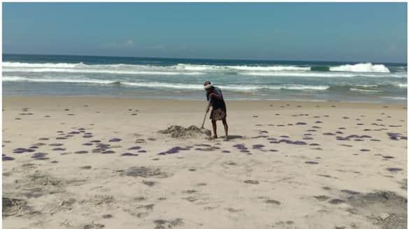 jelly fish found in kovalam beach