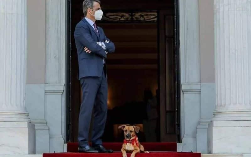Greek PMs pet dog interrupts his news conference