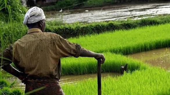 False information from  Officers on Crop damages in Chikkaballapur snr