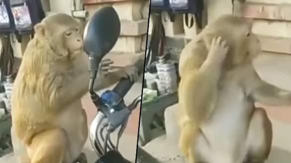 Monkey checks out itself in bike's mirror; his funny act will make your day - gps