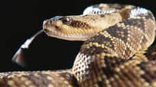 us woman finds more than 90 rattlesnakes in her home bsm