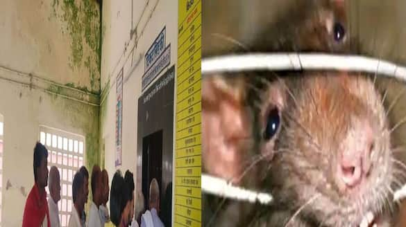 bihar rats cut computer wires at railway station, ticket counters stopped in aurangabad