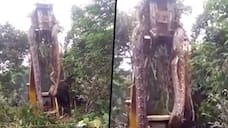 Gigantic snake lifted by crane from rainforest; viral video will give you goosebumps - gps