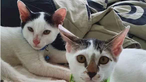Singapore woman fined for abandoning kittens
