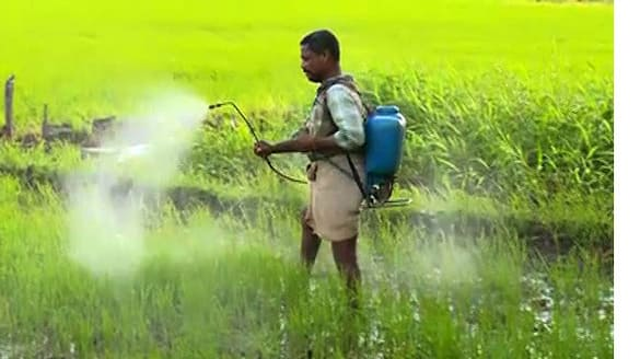 no help for Kuttanad paddy farmers
